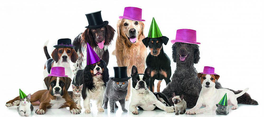 gruppo cani ok