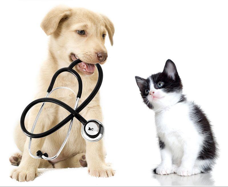 salute-che-fare-veterinaria-cane-gatto-parassita-interstinale